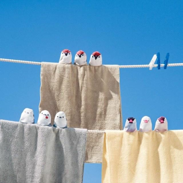 【可愛すぎかっ!!】物干し竿の上にちょこんっ♡ 3羽の小鳥が仲良くとまったフェイスタオルに心癒されるよ~!
