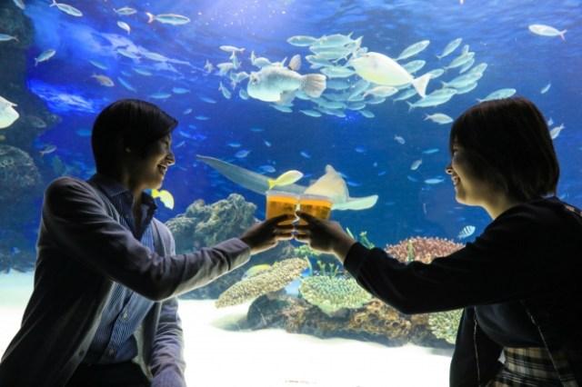 サンシャイン水族館がビアガーデンに♪ かわいい海の生き物たちを眺めながら酒が飲める喜びを噛みしめよう…!