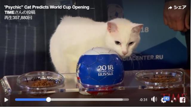 """【ワールドカップ】ロシアの """"予言ネコ"""" が試合結果を的中させまくってる! 勝利チームの旗がついたエサをモグモグ食べるらしい"""