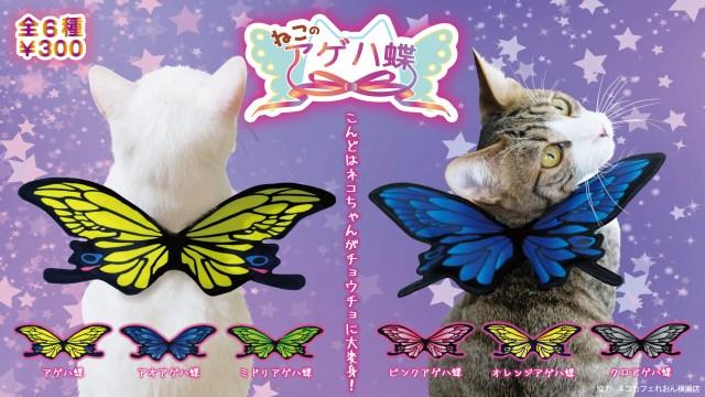 【幸せを呼ぶ猫!?】うちのニャンコがアゲハ蝶に! 前脚に通すだけでチョウチョに変身できるカプセルトイが登場だよ