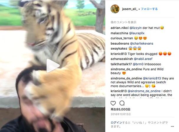 ライオンやトラとじゃれ合う男性の自撮りが刺激的すぎる★ 愛情表現がダイナミックな動物と男性の様子をご覧ください
