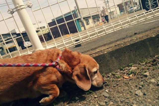"""【猛暑対策】ワンコの散歩の前に「地面を5秒間タッチ」! 愛犬を火傷から守るために飼い主からの """"ワン"""" アクションを"""