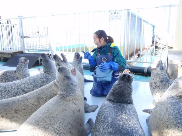 【ふるさと納税】あざらしたちにキレイなプールを! 日本で唯一の「あざらし保護施設」を応援するプロジェクトが登場