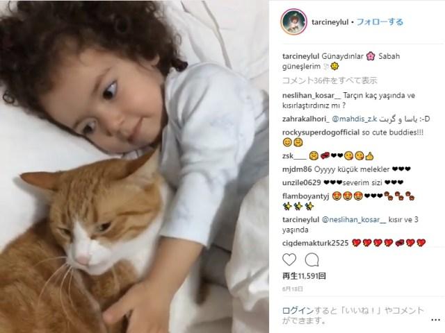 【ほんとは仲良し】ちょっと強引な女の子にプイッと離れていくネコさんの動画がたまらなくかわゆい!! この組みあわせ、天使すぎるよ…!