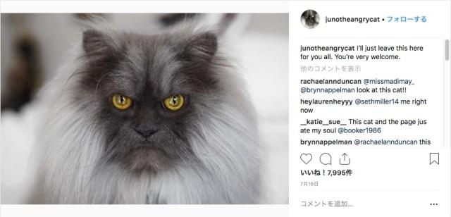 【怒ってニャいよ☆】まるで童話に出てくる生き物みたい! ド迫力のモフモフ猫、険しくも美しいお顔にご注目くだされ〜っっ!