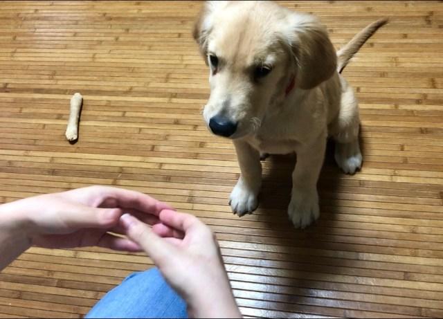 犬の前で手の輪っかを作ると鼻をハメてくる!? 海外で流行中の「スヌートチャレンジ」は 飼い主も一緒に楽しめる大満足の遊びです☆