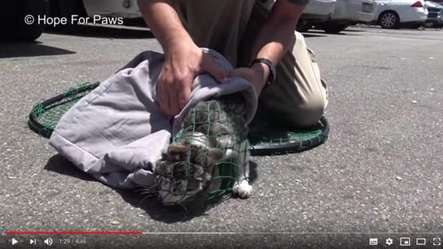 割れたガラス瓶に頭がはまった子猫を発見! 逃げまどう子猫を無事に保護するまでの一部始終