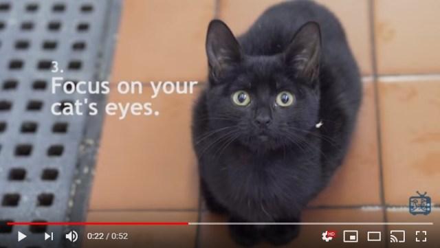 黒猫はインスタ映えしない!? ならば「黒猫を上手にかわいく撮影するテクニック」をご覧あれ!
