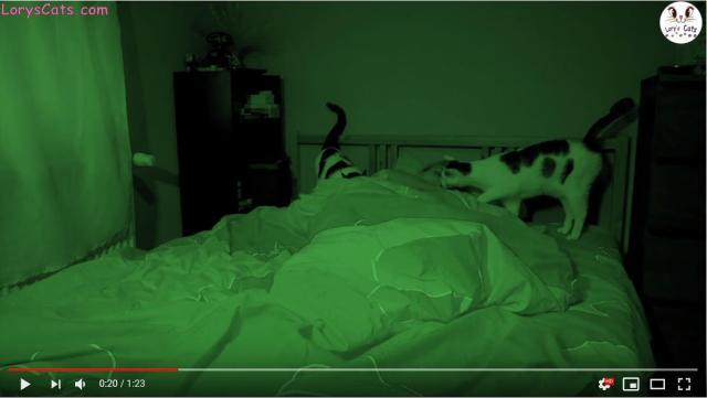 「猫と一緒に眠るとこうなります」動画がうらやまけしからん! 飼い主を起こしたい猫 vs 眠りたい飼い主