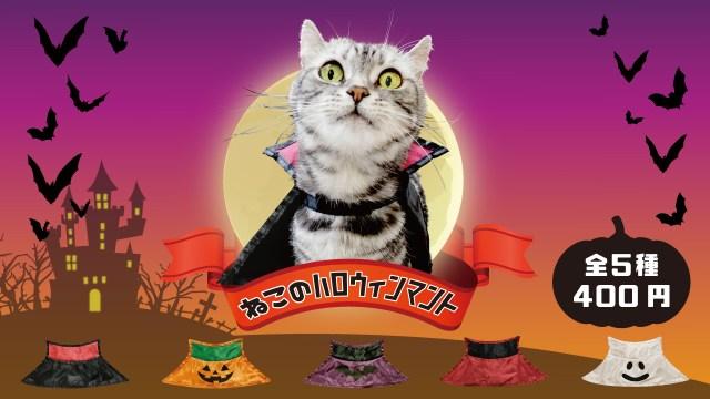 【ペットの仮装】カプセルトイに「ねこのハロウィンマント」が登場したよ! 黒マントやオバケなど全5種類あります