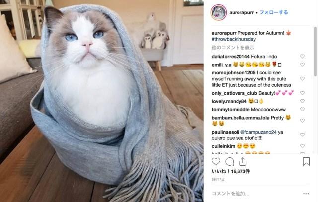 超美猫さまはマフラーがお好き♪  ファーやざっくり編みも着こなすファッショニスタなモフ猫をご覧あれ