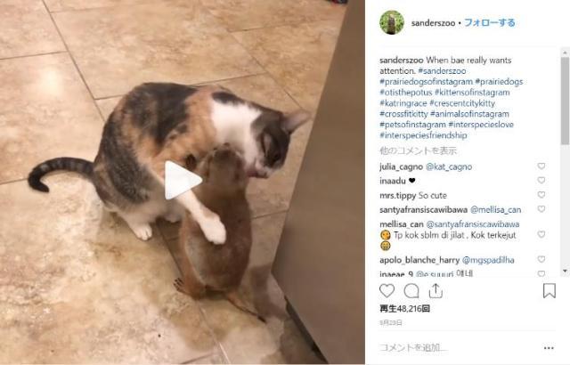 【可愛すぎ】大好きな猫とハグハグするプレーリードッグ…! 猫は強く抱きしめ返して毛づくろいというラブな2匹をご覧あれ