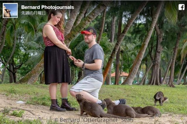 野生のカワウソたちがカップルのプロポーズを祝福!! カワウソ大好きな2人に起きた奇跡の瞬間をご覧ください