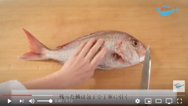 魚をさばけるようになりたい! に応えまくりの「さばけるチャンネル」がめっちゃ使える♪ 魚はもちろん貝や甲殻類もOK!