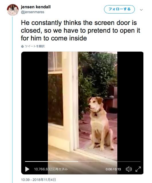 【なぜなのか】犬が網戸が閉まってると思い込んでる!? 「おいでよ!」と呼んでも来ないが網戸を開けるフリをすると…?