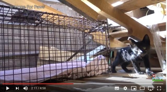 廃材置き場から子猫をレスキューせよ!「こっち来るニャ!!」と抵抗する子猫と奮闘するレスキュー隊から目が離せませんっ