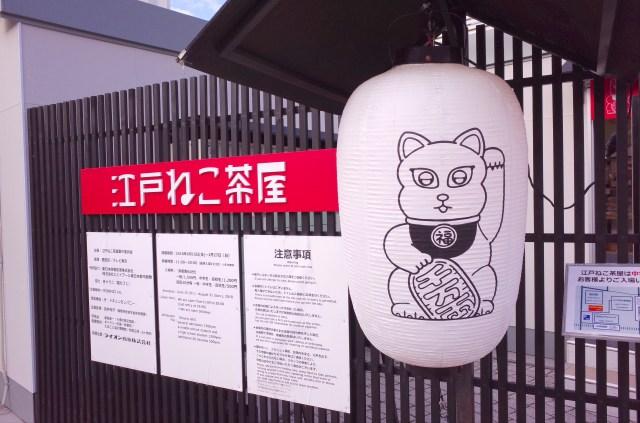 【徹底ガイド】両国の「江戸ねこ茶屋」を楽しむために知ってほしい6つのこと!「混雑を避けるなら平日昼間」「トイレがない」など