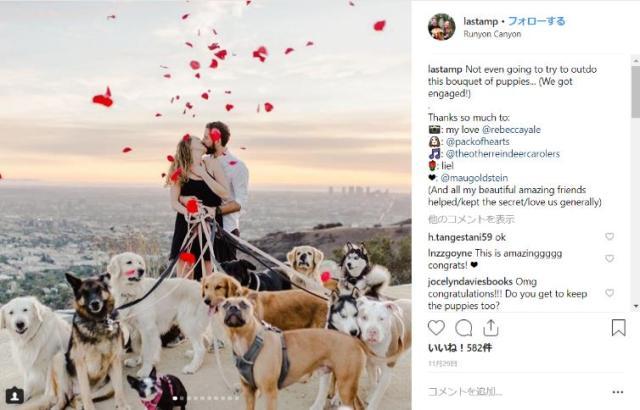 最高すぎるサプライズ!! 16匹のワンコが見守る、大都市を見下ろす丘での花びら舞い散るプロポーズ