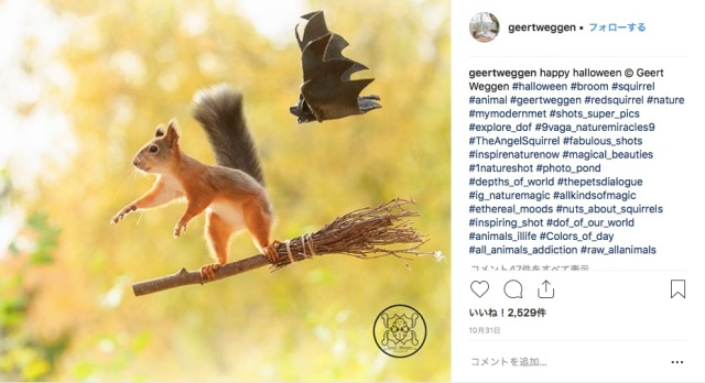 野生のリスたちをファンタジックにとらえた写真に癒される~♡ 小道具を使ったかわいい撮影の裏側も必見です