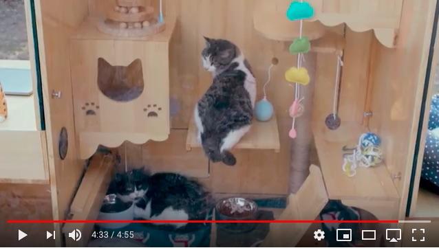猫好きのエンジニアが野良猫のためにAIシェルターを発明!「顔認証システムで出入り」「病気も検知」と超ハイテク