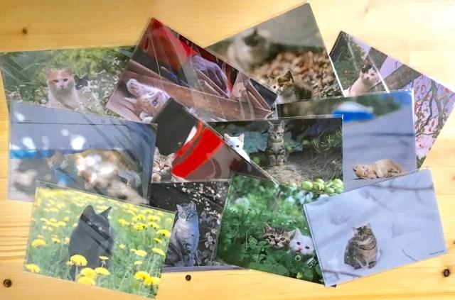 岩合さんとシャノアールのコラボ「猫ファイル」はどれが当たっても愛おしい! だけど裏面のシルエットにひとつだけ謎が…