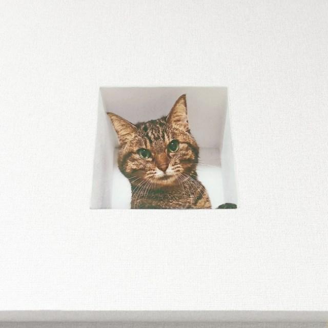 【ジーーッ】猫のいる生活を疑似体験できるウォールステッカーが登場! 壁のくぼみからこちらをじっと見つめてくれるよ