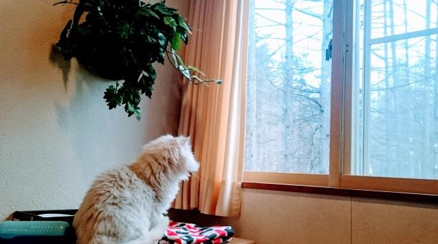 【実話】愛猫が天に召された理由は家の中の事故…老猫にだってバリアフリーが必要だと思った話