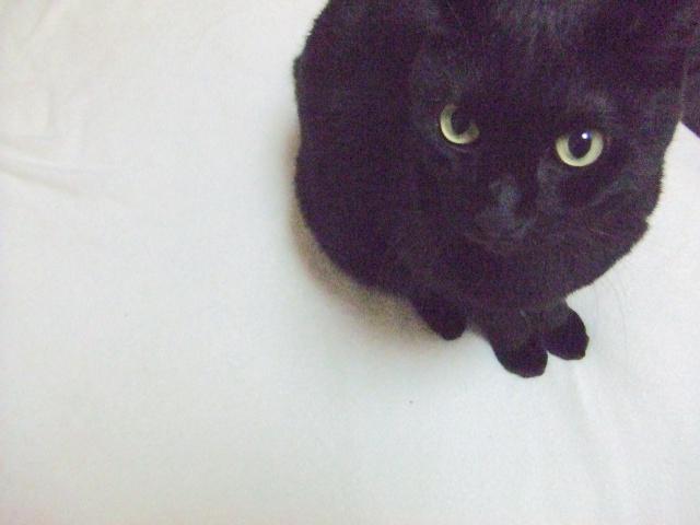 【黒猫コラム】あの日命を落としててもおかしくなかった…生後2日の黒猫は我が家のアイドルとして17年と11ヶ月の猫生を全うしました