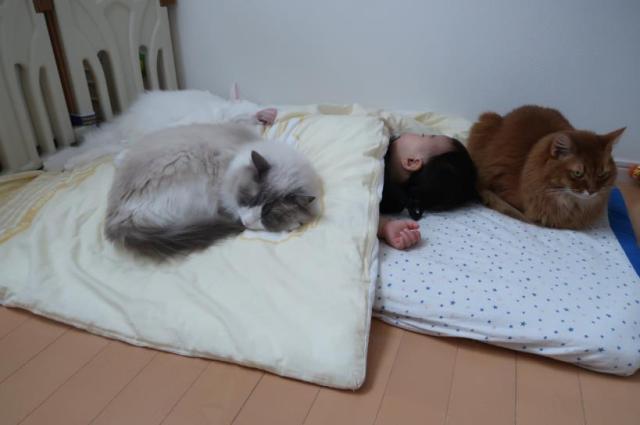 リアルねこあつめ! 小さな子どもたちの面倒を率先してみる猫ちゃんたちに癒されます♪