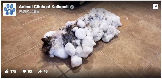 フワフワ猫がカチカチに! 雪まみれで凍ってしまったニャンコの救出劇
