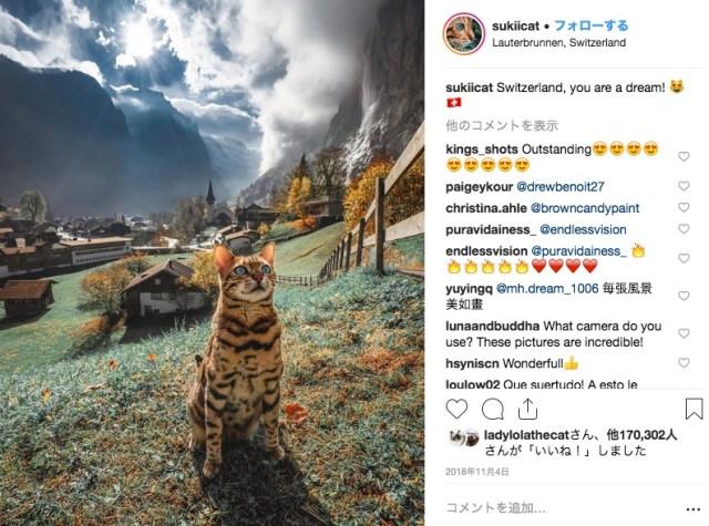 カナダの旅猫Sukiちゃんのインスタがアメージング!飼い主さんと一緒に世界中の絶景を巡っています