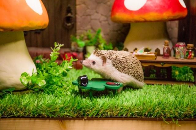 【かわいい世界】ちいさなペットやドールなどをファンタジックな写真に…撮影所「ミニチュアスタジオ」がステキ!