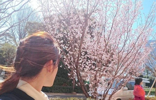 春なので話題の「ひとり花見」を体験してみた! 沢山のメリットと小さなデメリットがありました