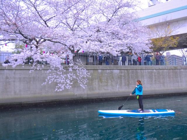 桜が咲きほこる川のど真ん中を歩くようスイーっと漕ぐ「SUP(サップ)」に女ひとりで挑戦してみた! 見たことない景色が広がっていました
