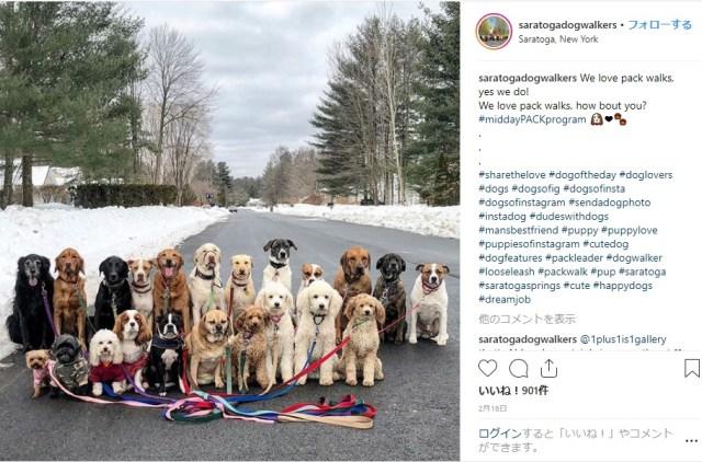 【三度見】ワンコ10数匹が街を整然と歩いてるーーーッ!? ナニゴトかと思いきやコレ、犬のお散歩代行サービスだそうです