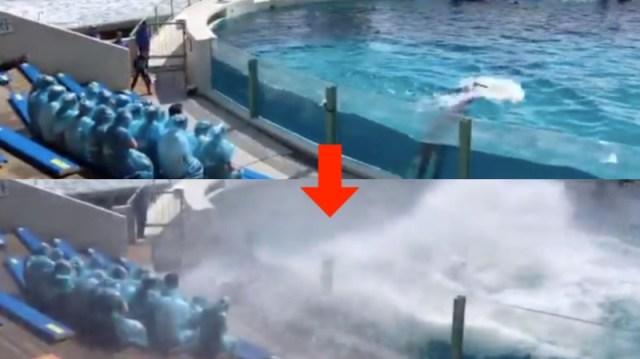 鴨川シーワールドの入社式は「世間の荒波」を体験できる!? シャチの「ララ」が豪快な水しぶきで新入社員を祝福する様子がすごい迫力です