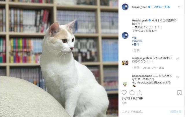 サンシャイン池崎が保護した猫「雷神ちゃん」が1歳の誕生日を迎えてお祝い中! 名前を呼ぶと手で返事してくれるようになったんだって