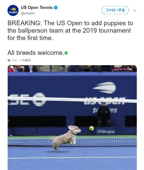 【テニス】ボールを拾いにいくのは人間ではなく「子犬」を採用する! 全米オープンの可愛すぎる冗談に世界がほっこりした話