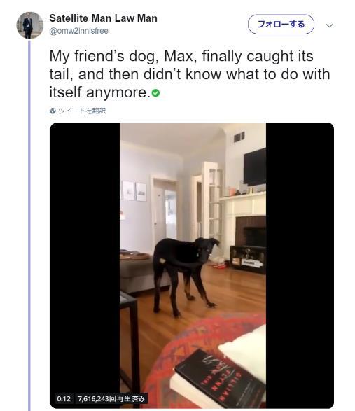 犬さん、自分のしっぽを追いかけ続けた結果…ついにしっぽを捕まえた! が、様子がおかしい展開に!?