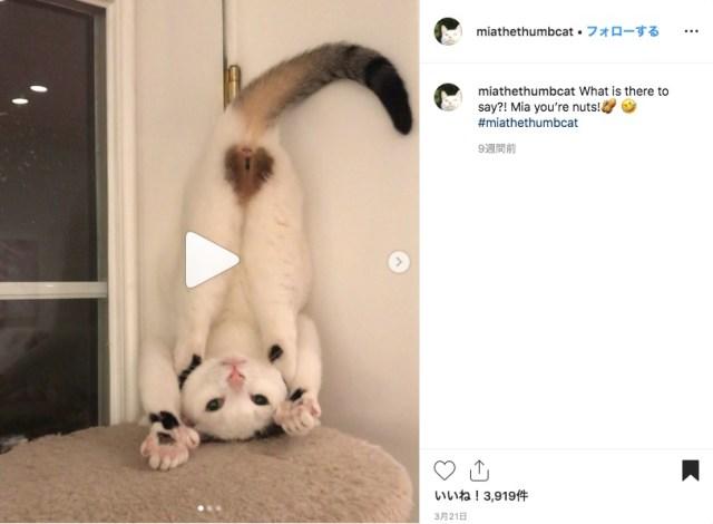 思いがけないところにハートマークがある猫ちゃん♡ チャームポイントを見せつけるポーズが止まりません