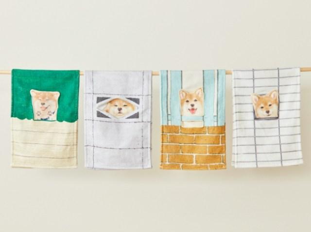 手を洗うたびに柴犬をなでなで♪ 壁や塀のすき間から顔を出す柴犬のタオルがかわいすぎる♡