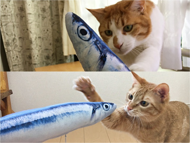 【検証】猫は「リアルな魚のぬいぐるみ」で遊ぶのかプレゼントした結果…海老のように興奮するではないか!!