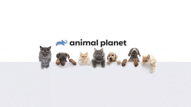アニマルプラネットがYouTubeチャンネルを開設したよ〜っ! ワイルドな獣医が登場する人気番組などが公開中です