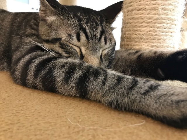猫カフェにいる気分を味わえるYouTubeチャンネル「にゃんくるTV」が始動! 気に入った猫ちゃんに会いに行けるよ