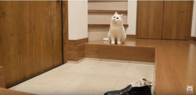 飼い主が外出したら飼い猫はどうなる? 隠し撮りしてみたら…愛しすぎる様子が映っていたよぉおお!