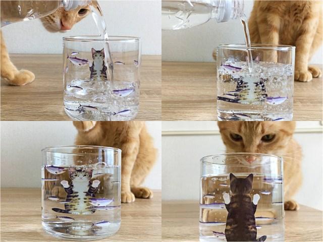 グラスに水を注ぐと…魚を見つめるお猫さまがみょ〜んと幅広に! ふふっと癒やされる「にゃんこグラス」