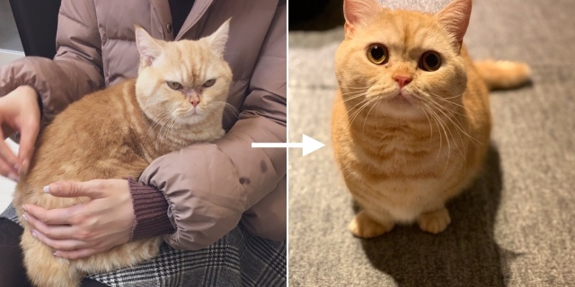 1年間愛情を受け続けた猫ちゃんの変化にビックリ!鋭かった目つきからきゅるんとしたお目目のかわいこちゃんに