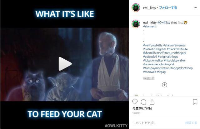愛猫を名作映画に出演させたい! 飼い主の愛と努力が実った自作のパロディ動画がかわいすぎ!