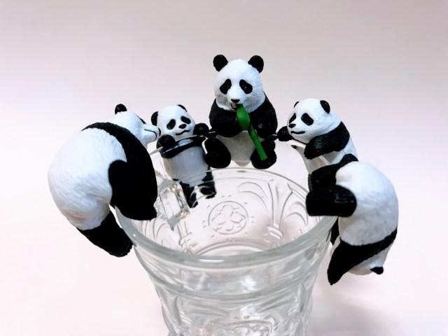 コップのフチにパンダが降臨! 動物園に行かなくても「パンダ欲」が満たされるフィギュアが爆誕しました