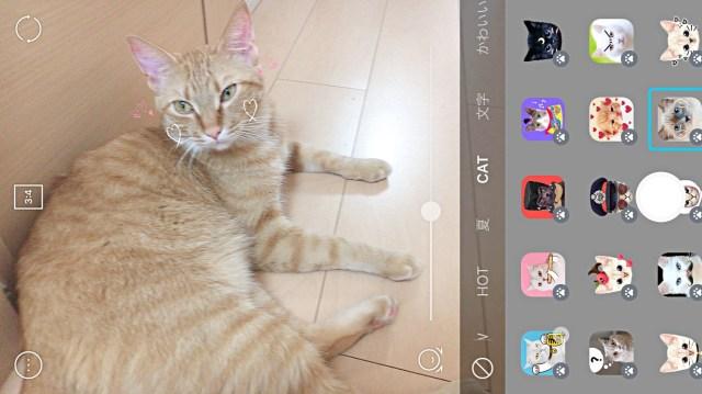 """カメラアプリSNOWに """"猫に反応するスタンプ"""" が出たニャ! 飼い猫と一緒に遊んだらめちゃくちゃ癒やされた〜!!!"""